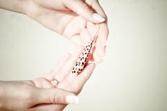 Держать seashell стоковые фотографии rf