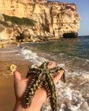 Держать starfish Стоковая Фотография RF