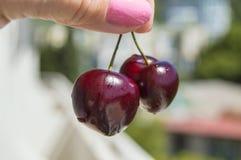 Держат 2 красных зрелых вишни пальцами ` s женщины Стоковые Фото
