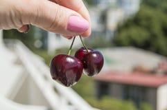 Держат 2 красных зрелых вишни пальцами ` s женщины Стоковое Фото