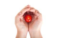 Держащ руки при томат изолированный на белой предпосылке Стоковые Фото