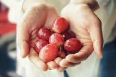 Держащ свежий плодоовощ кивиа в годе сбора винограда рук тонизируйте Селективный фокус Стоковое Изображение