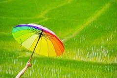 Держащ multicolor зонтик в рисе сохранено стоковая фотография