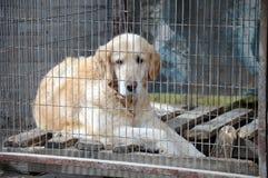 Ожидани-и-те собаку Стоковые Изображения RF