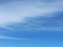 Держите лететь Стоковая Фотография RF