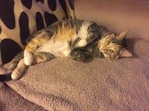 Дерзкая младшая девушка кота Tabby Стоковая Фотография