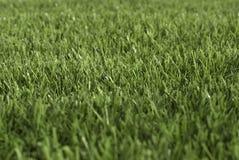 дерновина Стоковая Фотография RF