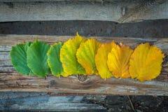 100 детализировали диез serie весьма зеленых megapixels листьев красный к поворачивать Стоковые Изображения