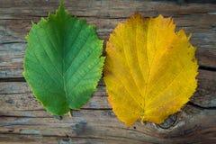 100 детализировали диез serie весьма зеленых megapixels листьев красный к поворачивать Стоковая Фотография RF