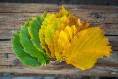 100 детализировали диез serie весьма зеленых megapixels листьев красный к поворачивать Стоковые Изображения RF