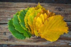 100 детализировали диез serie весьма зеленых megapixels листьев красный к поворачивать Стоковые Фотографии RF