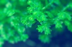 детализирует зеленый завод Стоковая Фотография