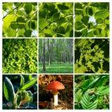 детализирует лето весны гриба пущи Стоковое фото RF