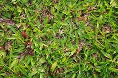 детализирует текстуру зеленого цвета травы Стоковое Изображение RF