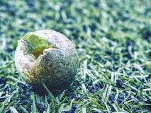 Детализируйте взгляд в сломленное одичалое яичко в траве Малая коричневая раковина голубого зеленого цвета Стоковые Изображения