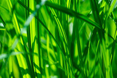 детализируйте зеленый цвет травы Стоковая Фотография