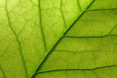 детализируйте листья Стоковые Фото