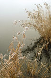 детализируйте первое озеро заморозка Стоковое Изображение RF