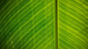 Детали больших зеленых лист, конец вверх лист стоковые фото