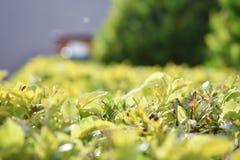 Детали листьев в саде стоковые фотографии rf