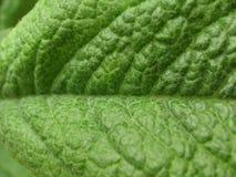 Детали листьев Стоковое фото RF