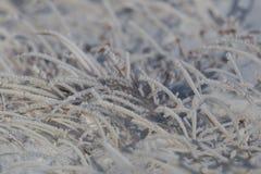 Детали много замороженных травинок в зиме с снегом Стоковая Фотография