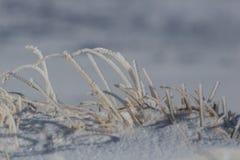 Детали много замороженных травинок в зиме с снегом Стоковые Фотографии RF