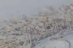 Детали много замороженных травинок в зиме с снегом Стоковое фото RF