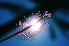 Детали цветка с солнечным светом стоковая фотография