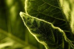 детальная текстура листьев Стоковые Изображения