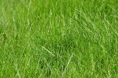 Детальная текстура травы Стоковое Фото