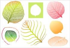 детальные высокие листья Стоковое Изображение RF