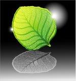 детальные высокие листья Стоковые Фотографии RF