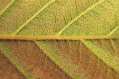 детальный зеленый желтый цвет листьев Стоковое фото RF