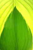 Детальный конспект листьев Стоковые Изображения