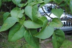 Детальный крупный план лист лета стоковое изображение
