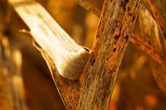 детальный тростник Стоковое Изображение