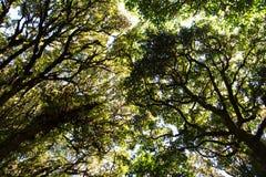 Деталь ветви, ствола дерева и листьев дерева в зеленом лесе Стоковая Фотография