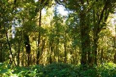 Деталь ветви, ствола дерева и листьев дерева в зеленом лесе Стоковая Фотография RF