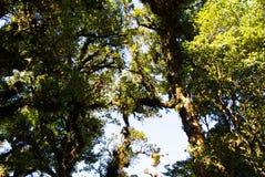 Деталь ветви, ствола дерева и листьев дерева в зеленом лесе Стоковое фото RF