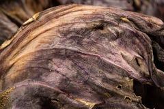 Деталь высушенных лист красной капусты Стоковое Изображение