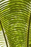 деталь выходит пальма стоковое фото