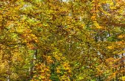 Деталь в желтом лесе осени стоковые фотографии rf