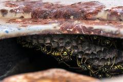 Деталь гнезда оос Стоковые Фото