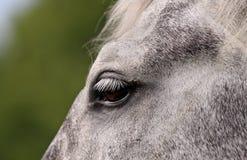 Деталь головки лошади Стоковое фото RF