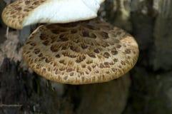 Деталь гриба Стоковая Фотография