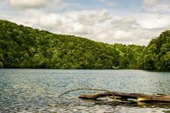 Деталь дерева вставила в одном из озер природного парка и при лес на заднем плане окружая на пасмурный день Стоковые Изображения