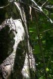 Деталь дерева в лесе Стоковое Изображение