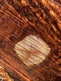 Деталь дерева отрезка Стоковое Фото