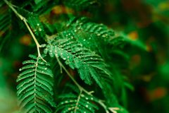 Деталь, живая, дизайн, красивый, одиночный, осень, предпосылка, ботаника, коричневый цвет, цвет, украшение, сухое, падение, листв Стоковые Изображения